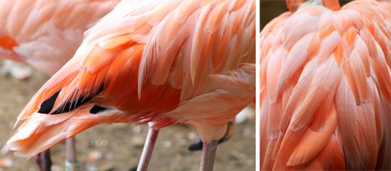 flamingos_006